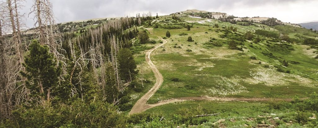 The Arapeen OHV trail system is located two hours south of Salt Lake City in Sanpete County. You will find hundreds of trails to explore there.